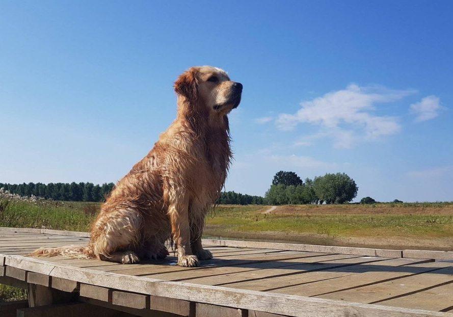 Hond Jayden