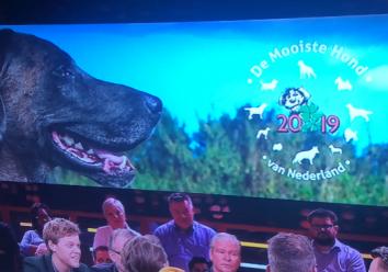 RTL Late Night Mooiste Hond